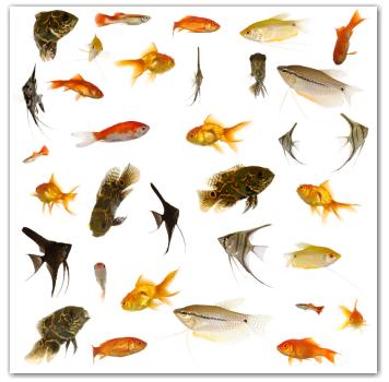 Can I Purchase Live Aquarium Fish on the Internet? | AquariumPros, Inc