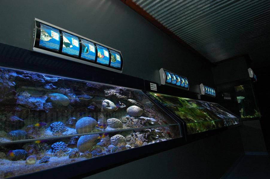 Aquarium-Guadeloupe003