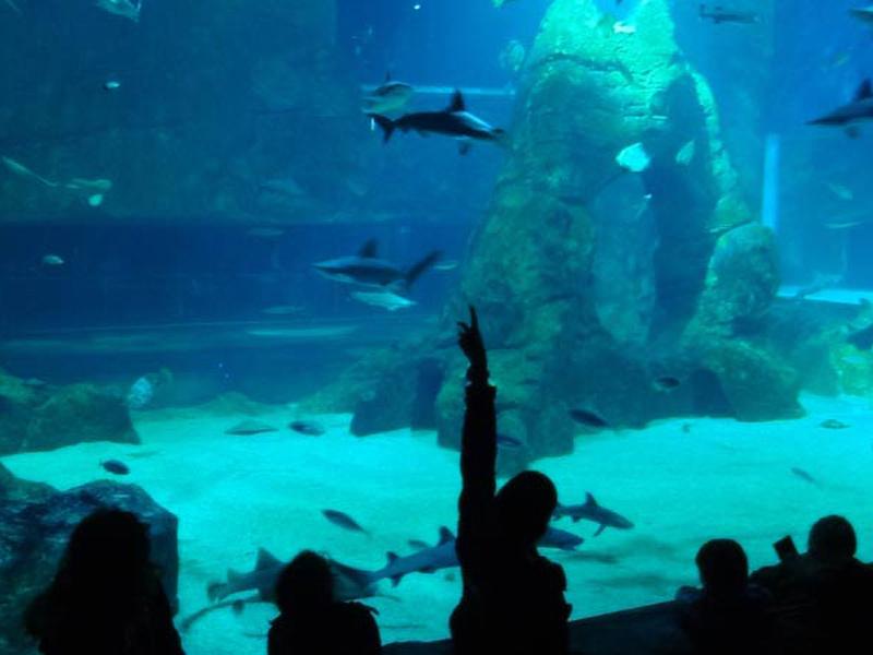 repas-des-requins