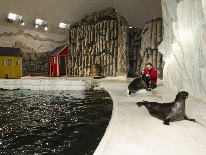 phoques polaire