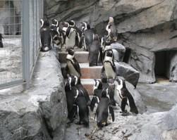 長崎ペンギン水族館に遊びに行こう