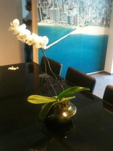 Aluguel de arranjos florais, jarros, plantas ornamentais e grama sintética para seu evento.