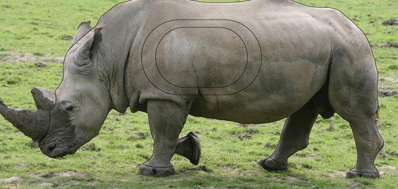 rhino nature