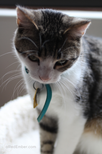 mosby cat