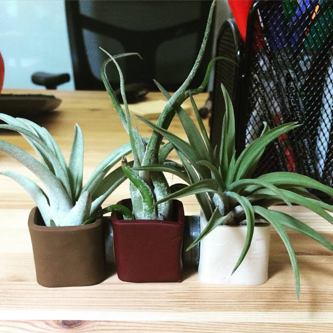 office air plants
