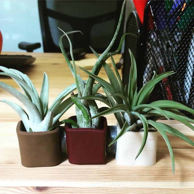 office air plants