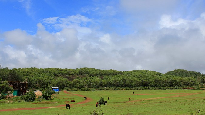 Empty green field south of Gokarna.