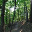 Lake Leatherwood: Miner's Rock Trail – 4mi photo