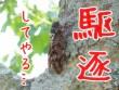 セミ撃退に水の効果検証!蝉ファイナル対策や殺虫剤無い時に便利?