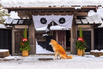 インスタのShinji Ono(小野慎二郎)はなぜ人気?犬効果?