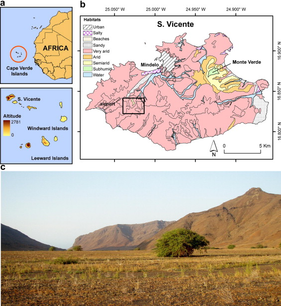 High temperatures constrain microhabitat selection and activity     Map of the Cape Verde Islands showing the archipelago location  its  altitudes  a  and location of the study area in S    o Vicente Island   Geographic