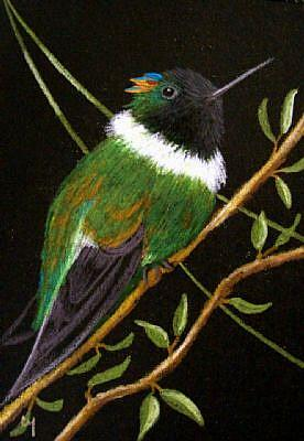 Horned Sungem Male Hummingbird   by Cyra R  Cancel from Gallery Detail Image for art Horned Sungem Male Hummingbird