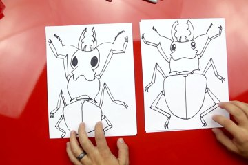 stag-beetle-feature