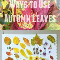 What to do with Autumn Leaves