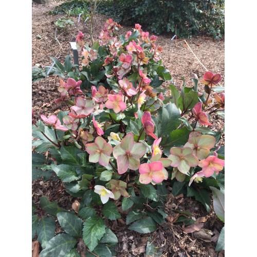 Medium Crop Of Plant Delights Nursery