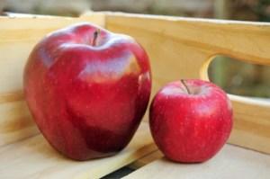 分蘋果的故事