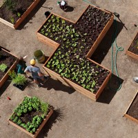 A Salad Garden Grows at the Getty
