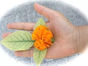 toshan hand