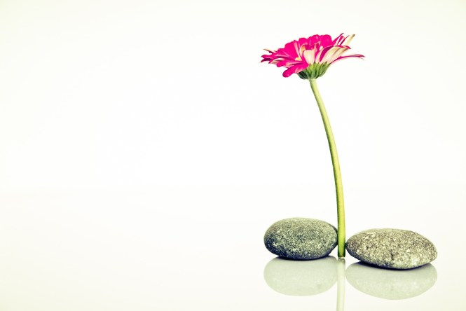 flowers increase compassion