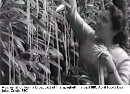 spaghetti_harvest-425