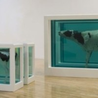 Damien Hirst's cows come to Torbay
