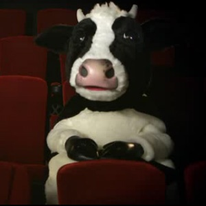 Ever come across a moody cow at the cinema? It's time to make a #moodycow happy