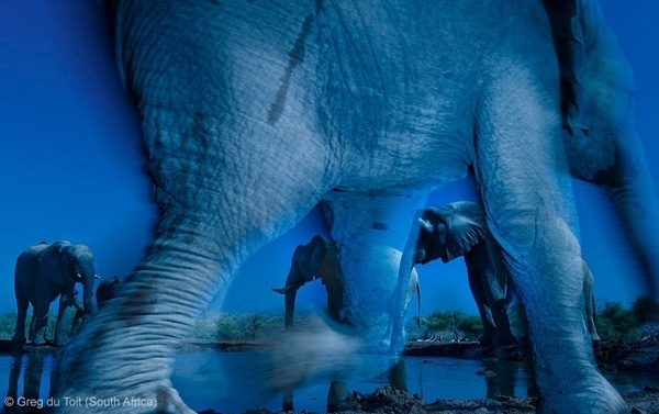 The search for the next Wildlife Photographer of the Year begins