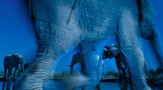 Essence of elephants by 2013 Greg du Toit: Wildlife Photographer of the Year - Grand title winner
