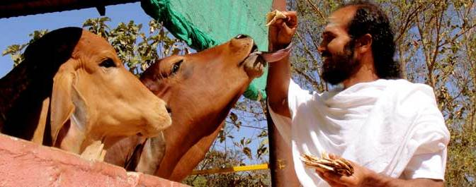Cows Nutrition and Food Security in Vedas