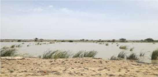 Photograph of seawater intrusion in Lower Sindh, Pakistan, due to upstream water development