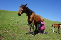 unten liefern Pferde die Milch ...