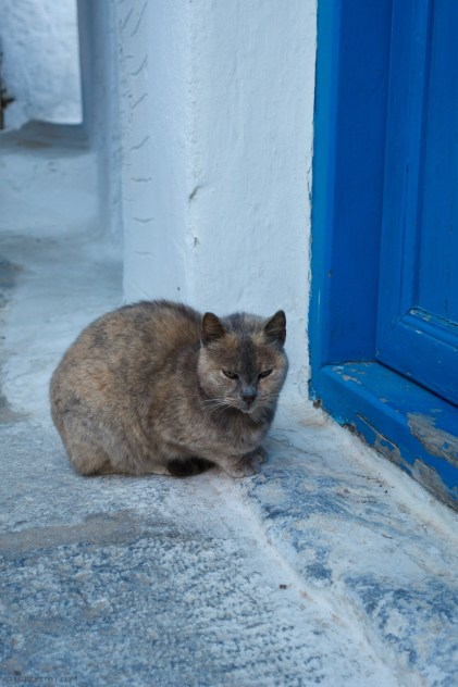 cat in Chora Amorgos, Greece