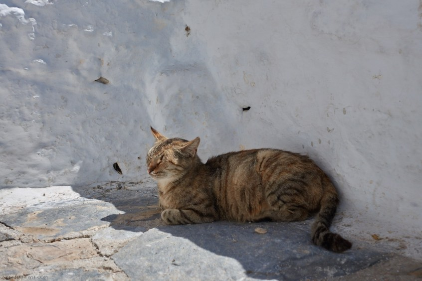 cat in Chozoviotissa monastery, Amorgos Greece