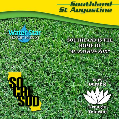 Medium Crop Of St Augustine Sod