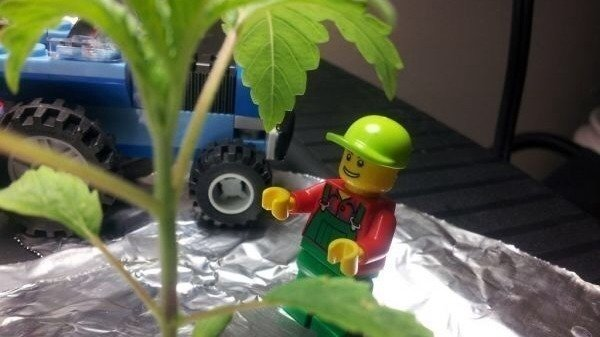 Petition      J    rgen Vig Knudstorp The Lego Group  CEO  Use hemp for     Petition      J    rgen Vig Knudstorp The Lego Group  CEO  Use hemp for lego  blocks      Change org