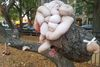 What On Earth Happened To This Wicker Park Tree? Art Baffles Locals