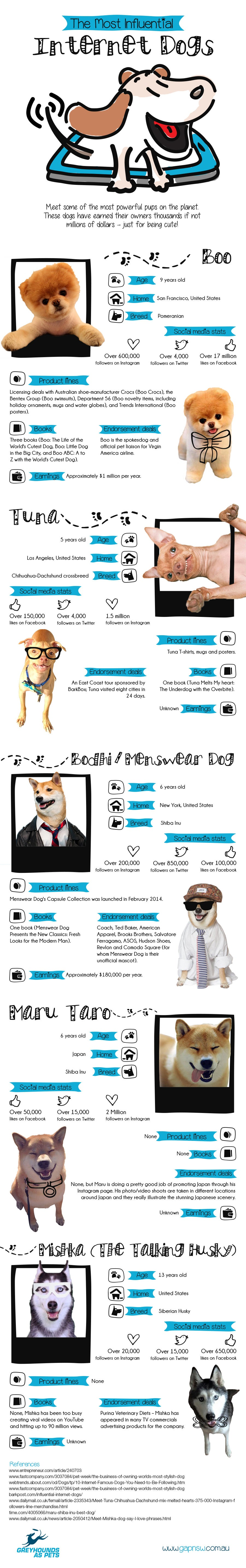 Influential dogs on internet (Infographic)