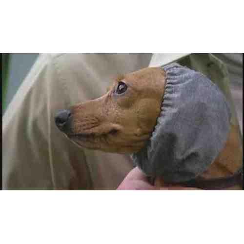 Medium Crop Of Homemade Dog Ear Cleaner
