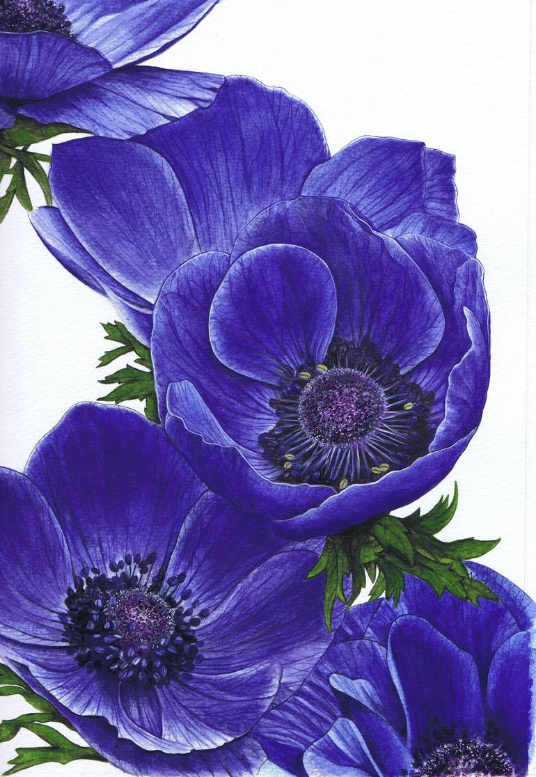Pool Saatchi Art Artist Nicola Blue Poppy Saatchi Himalayan Blue Poppy Painting By Nicola Mountney Himalayan Blue Poppy Plug Plants Himalayan Blue Poppy Uk houzz-03 Himalayan Blue Poppy