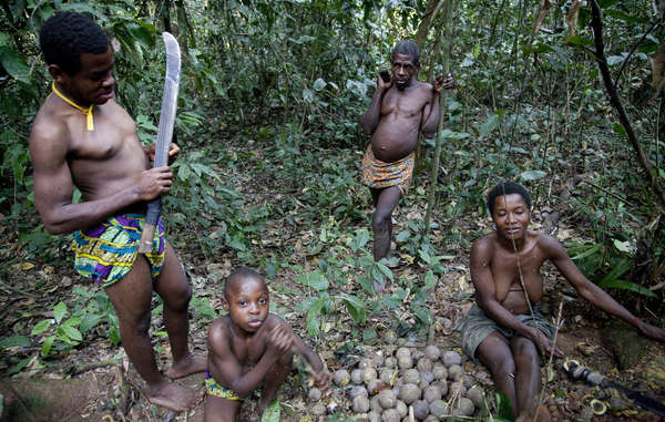 Pygmy' tribes like the Baka have lived in the rainforests of the Congo Basin for millennia. They are being illegally evicted in the name of conservation, but logging, poaching and other threats to endangered species like gorillas, forest elephants and pangolins continue.