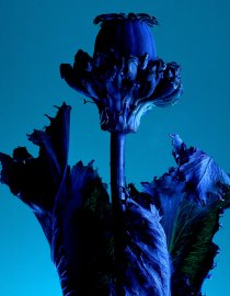 Bloom - Photo by Henry Bourne   Yellowtrace