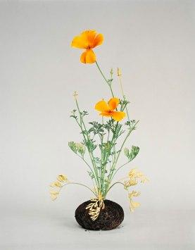 Diana Scherer, Nurture Studies | Yellowtrace
