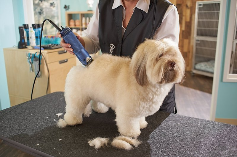 Large Of Best Dog Clippers