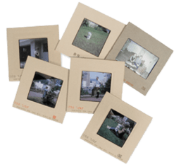 Slide & Photo Transfer