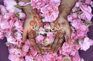摩洛哥 玫瑰谷 5月 玫瑰花節 Rose Valley Festival