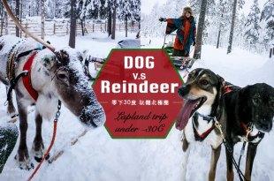 狗雪橇vs馴鹿雪橇 到底要選誰來拉雪橇呢 全面分析-零下30度玩翻北極圈