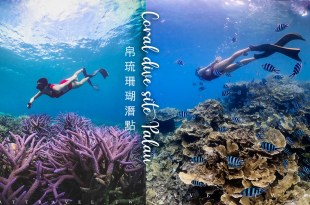 帛琉珊瑚百匯 上帝的水族箱 玫瑰珊瑚 七彩珊瑚 薰衣草珊瑚 百年硨磲貝 一次給你