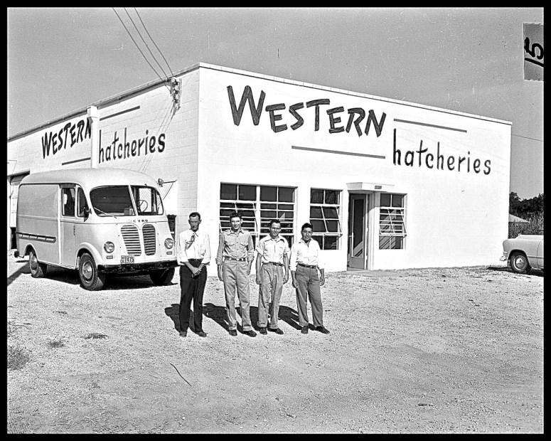 Western Hatcheries Office, Ausitn TX, October 16, 1951