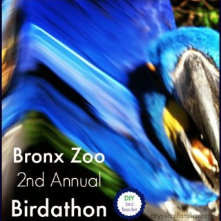 It's the 2nd Annual Birdathon at The Bronx Zoo (+ DIY Birdfeeder)