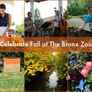 The Bronx Zoo Harvest Festival: September 19 & 20 (2015)